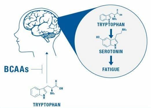 tryptophan illustration
